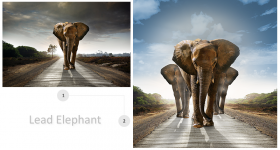 Elephants Imagery Manipulation for Print Ad